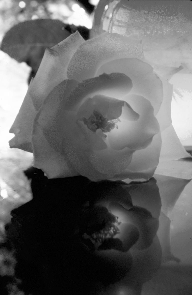 Rose Shadow (B/W)